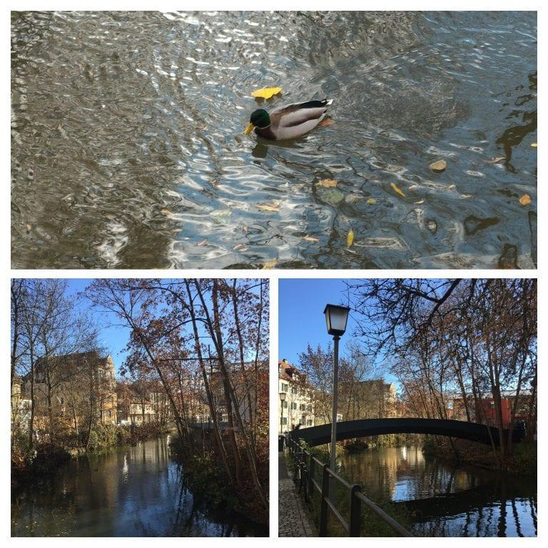 Patos no rio e a ponte entre as árvores