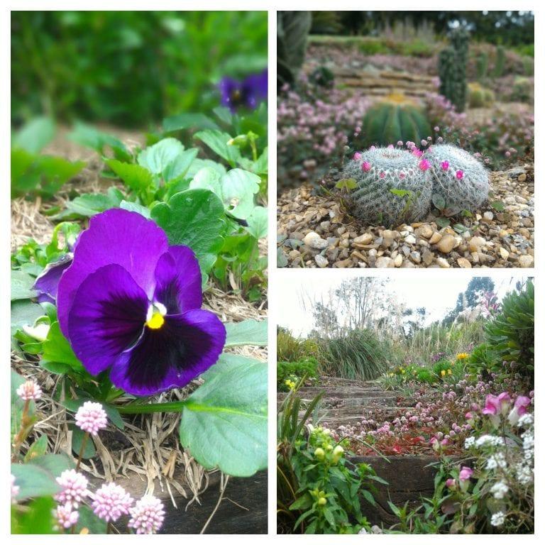 Flores do Parque Amantikir
