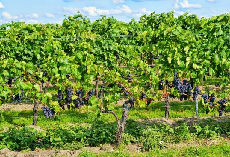 Rota dos vinhos da Borgonha