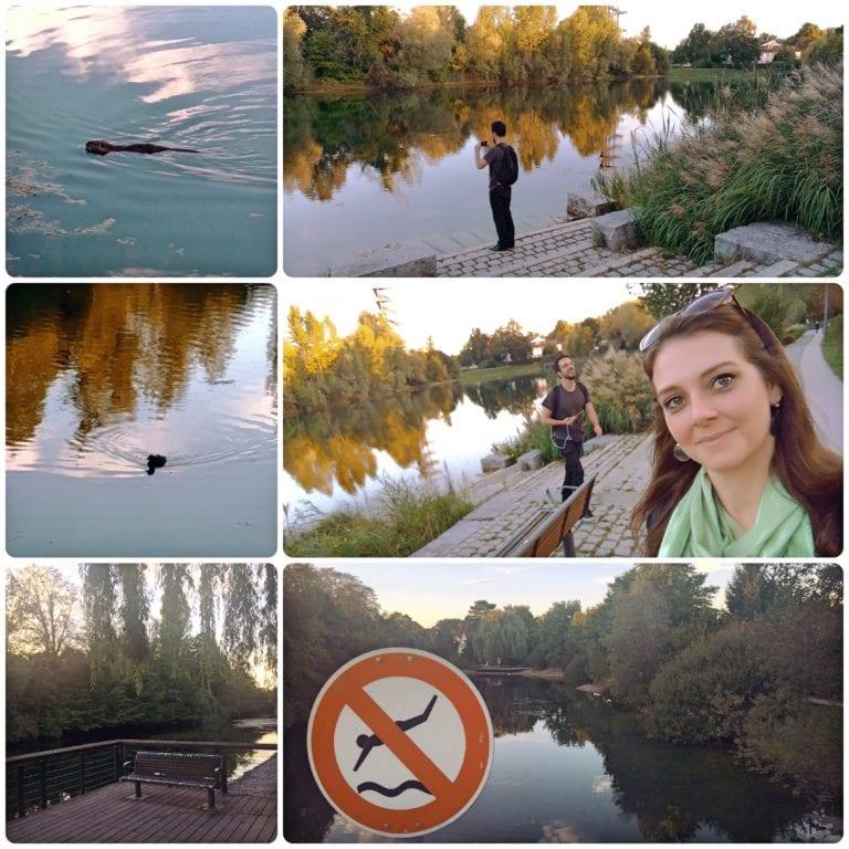 O que fazer em Kehl - caminhando pela beira do lago, castor e o patinho