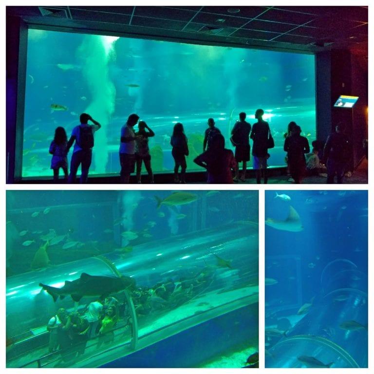AquaRio - Grande Tanque Oceânico visto do andar de cima