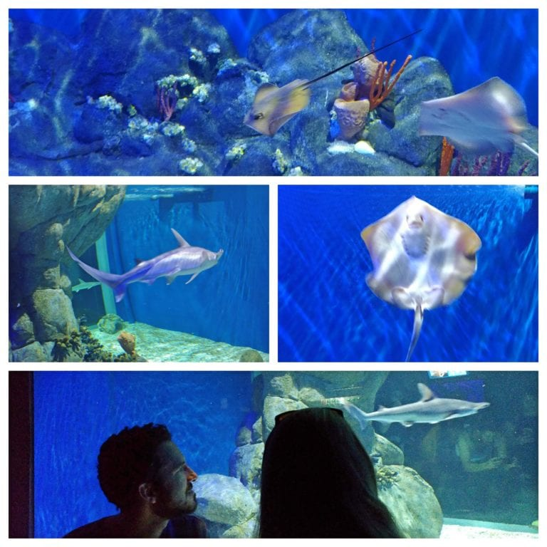 AquaRio - Recinto com arraias, tubarões e várias espécies