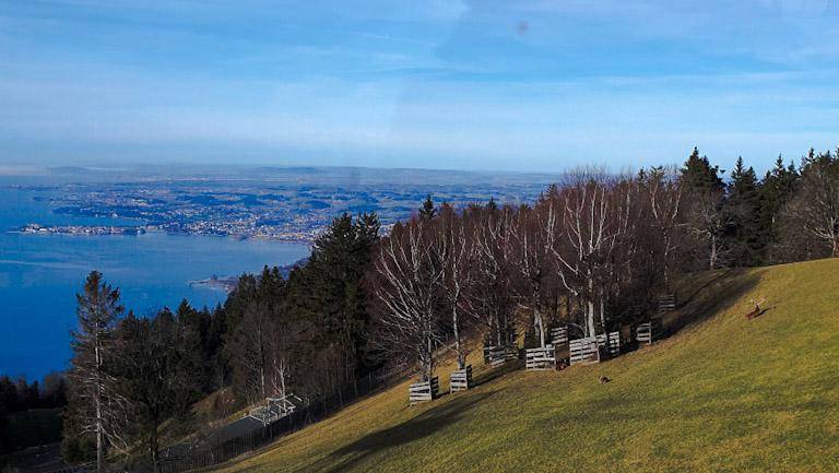 De dentro do bondinho do Pfanderbahn, o teleférico da Montanha Pfander em Bregenz: cervos - animais alpinos podem ser vistos já na chegada