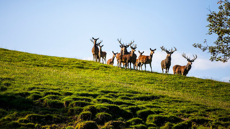 Vida selvagem na montanha Pfänder