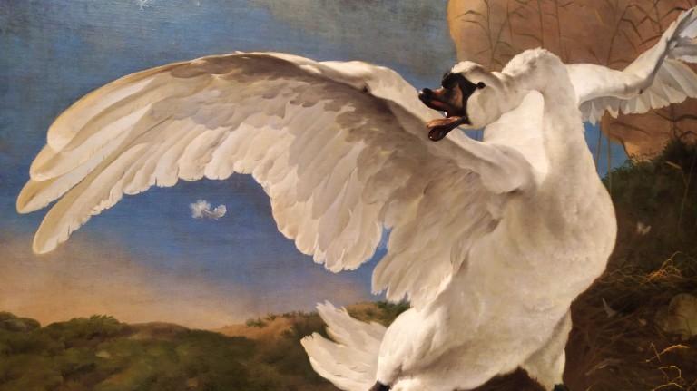 The Threatened Swan (Dutch: De bedreigde zwaan) - Jan Asselijn (1650)