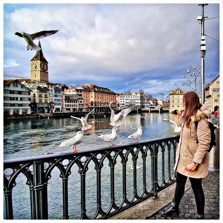 As gaivotas e o panorama na Münsterbrücke | O que fazer em Zurique